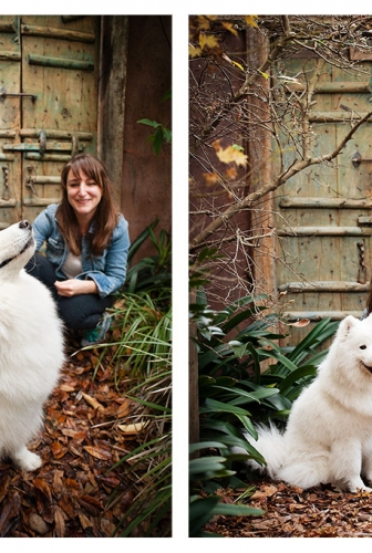 Outdoor studio – Gracie the samoyed