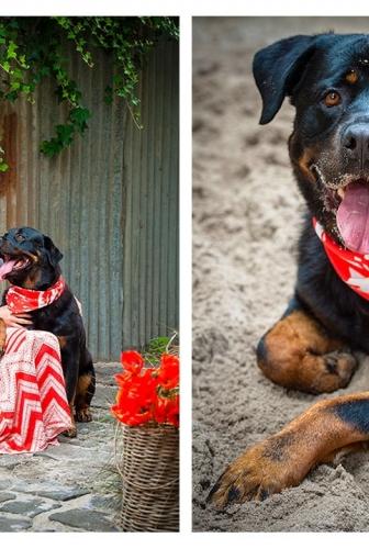 Outdoor Studio – Gentle Rottweiler