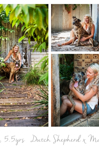 Dutch Shepherd x Mastiff – Outdoor studio