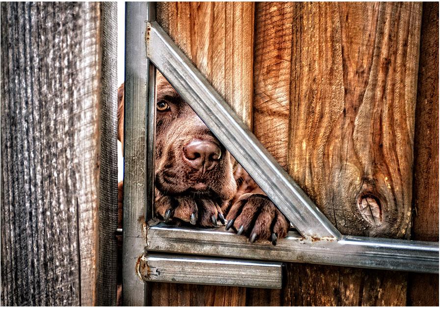 Ollie through fence