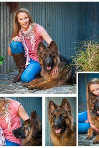 German Shepherd – Outdoor studio