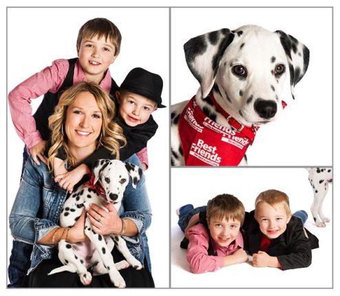 Dalmatian Puppy - PAWtraits Pet Photography Melbourne