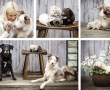 Preparing for your Pet's photo shoot?