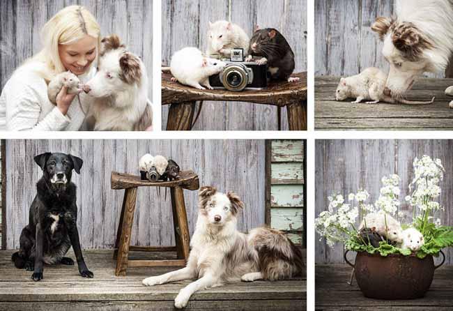Rats - PAWtraits, Pet Photography Melbourne