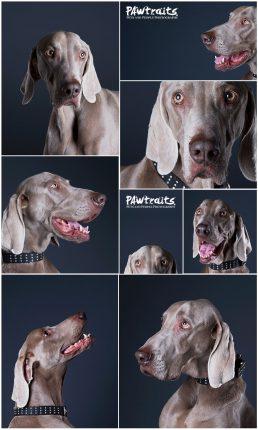 pet's photo shoot