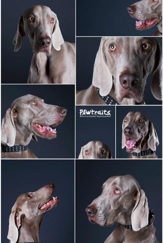 Studio Pet Photo