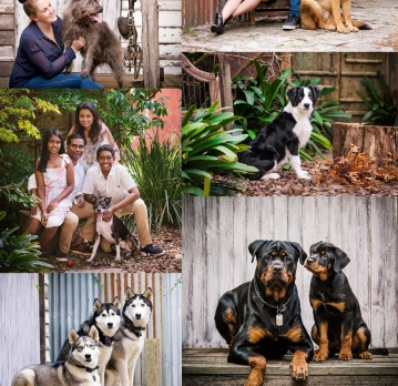 Tips for your Pet's photo shoot