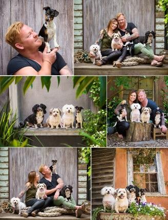 Large dog families