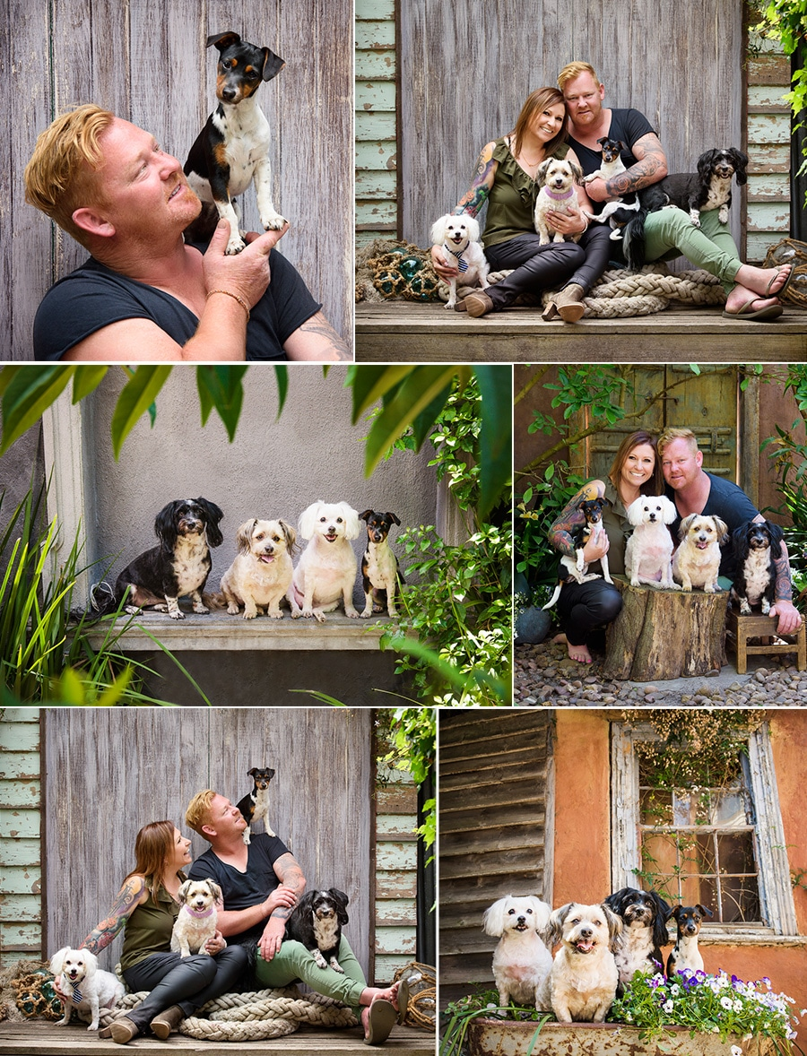 Large dog families