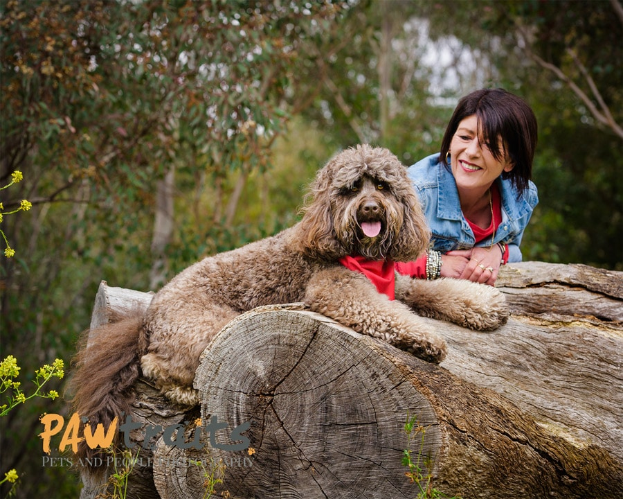 Best Dog Photography - Melbourne