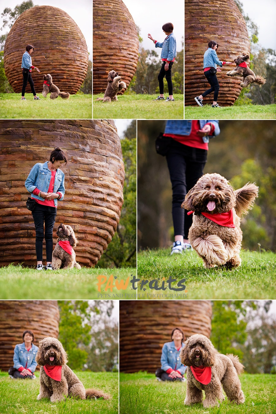 Action shots of Dogs