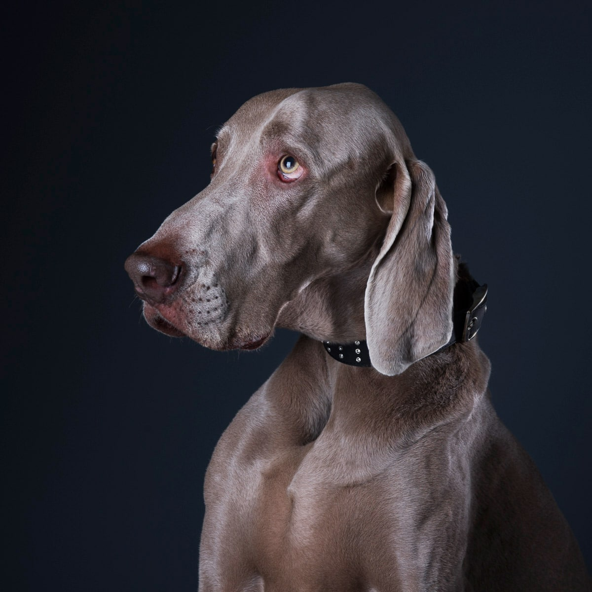 PAWtraits Pet Photography