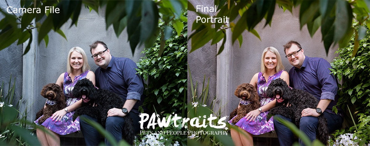 PAWtraits Digital vs Print
